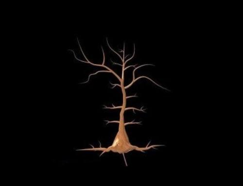 Neuronas piramidales: funciones y localización en el cerebro